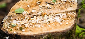 Stump Grinding & Removal