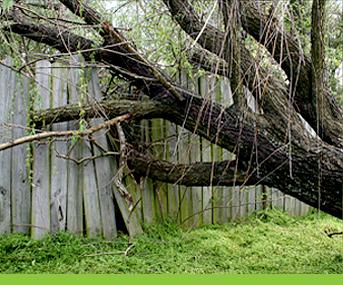 Tree Company Bronx
