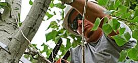 Tree Trimming, Pruning & Cutting
