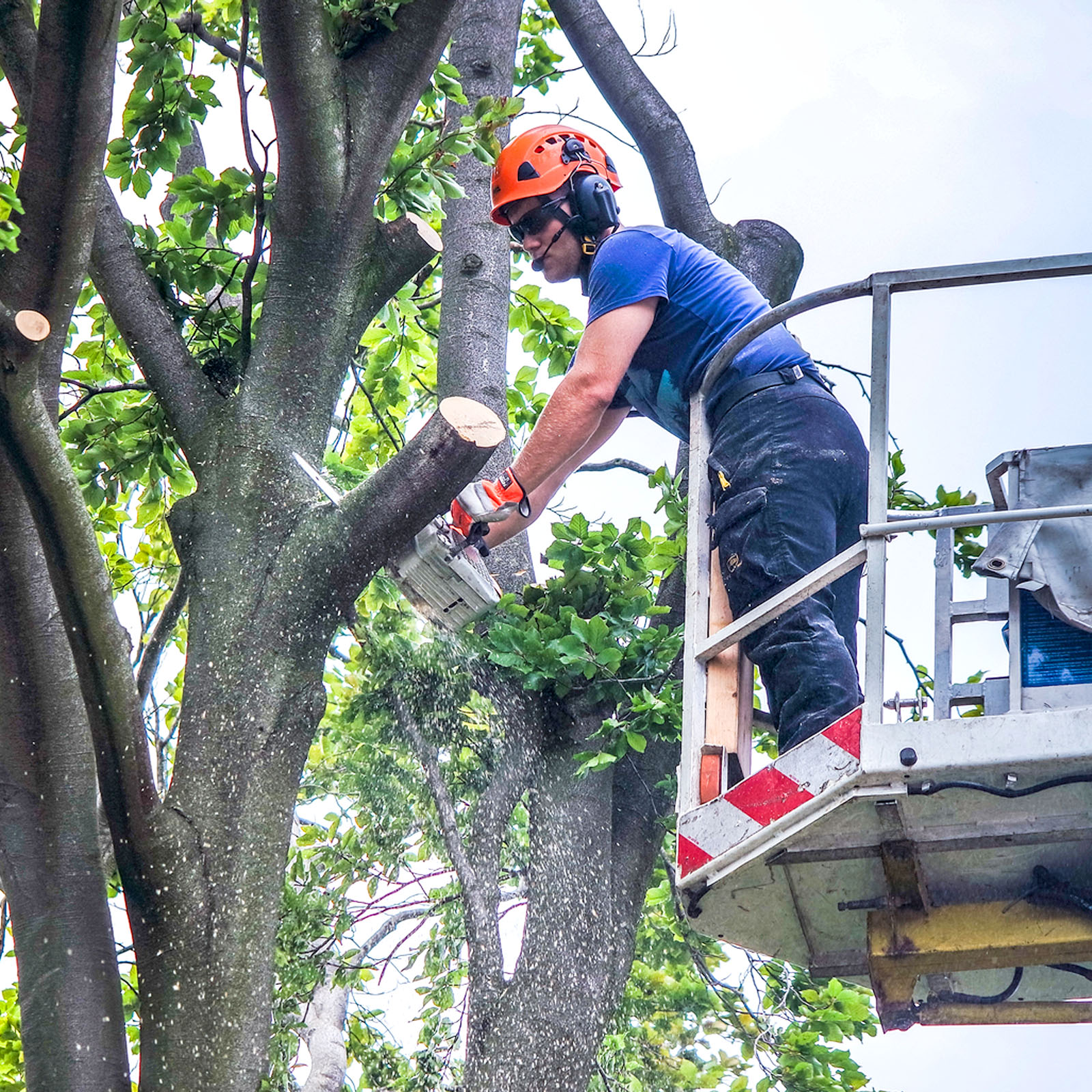 A Affordable Tree Experts NYC
