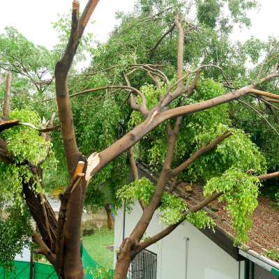 fallen-tree-400x400